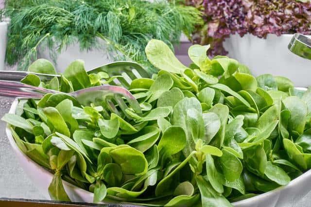 a bowlful of fresh spinach