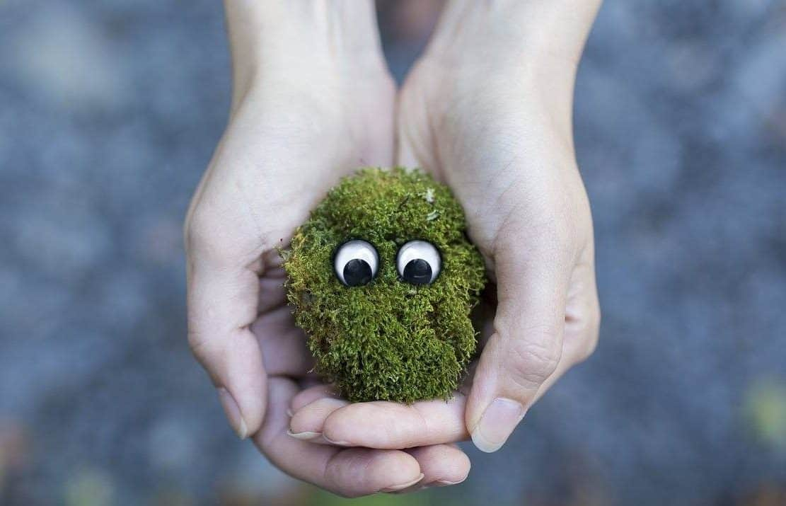 person holding a handful of moss with both hands